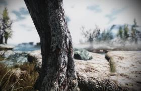 Skyrim_235